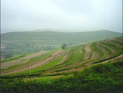 alfalfa terraces china