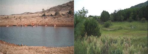 savory grassland transformation